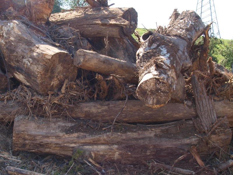 Stammholz / stem wood - Input